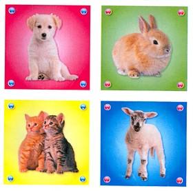 Pekböcker i blockform: Fotografiska djur