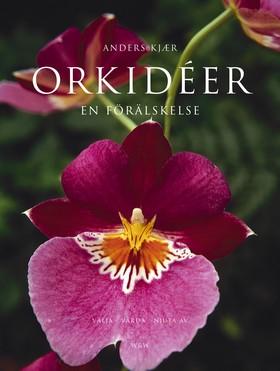 Orkidéer - en förälskelse