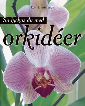 Så lyckas du med orkidéer