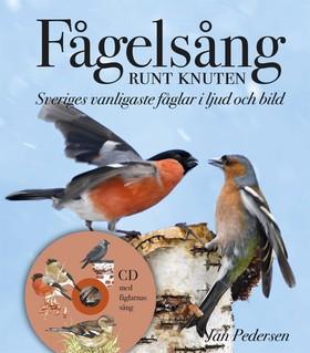 Fågelsång runt knuten - Sveriges vanligaste fåglar i ljud och bild