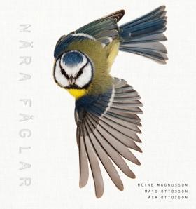 Nära fåglar